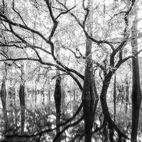 Swamp Light print