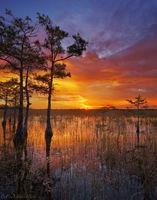 Cypress Sunset print