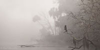 Fog on the Chassahowitzka River print