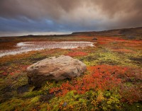 Fall in Iceland print