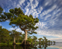 Blue Cypress Lake print
