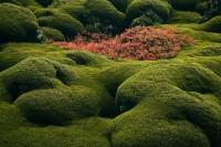 Among the Moss print