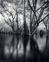 Backwater Spirits print