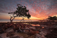 Mangrove and Mackeral Sky print