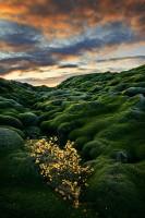 Mossy Morning print