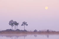 Moonset over Pine Glades print