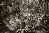 Palmscape print