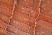 Sandstone Detail III print