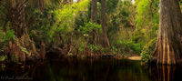 Loxahatchee Panoramic print