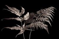 Pair of Ferns print