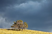 Lone Tree and Stormy Sky print