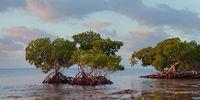 Peaceful Panoramic print