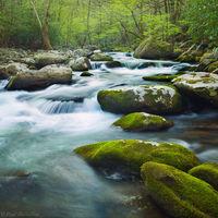 Spring Cascade print