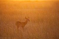 Everglades Buck print