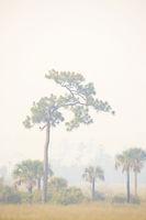 In the Smoke print