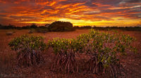 Fire over the Mangroves print