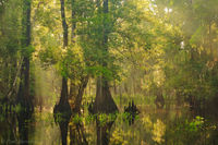 Fisheating Creek Backwaters print