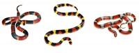 Coral Snake(L) and Scarlet Snake(R) print