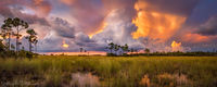 Pineland Cloudscape print