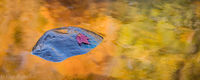 Autumn Reflected print