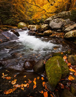 Fall Cascades print