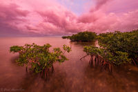 Magenta and Mangroves print