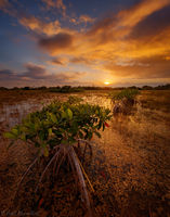 Mango Sky and Mangroves print