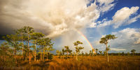 Big Cypress Rainbow print