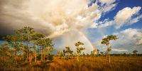 Big Cypress Rainbow print