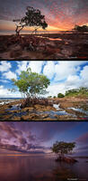 Mangrove Desktop Download 3 - Pack