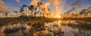 Everglades National Park, Florida, pine rocklands, sunset, nature, photography, florida national parks