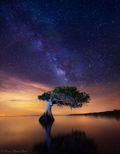 cypress, milky way, night, florida, nature, photography