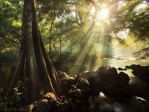 hillsborough river, state park, sun rays, rapids, morning, atmosphere, awarded, florida, south florida, nature, photography, hillsborough