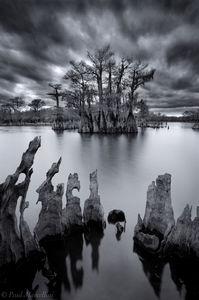 chipola river, dead lakes, florida, cypress, north florida, nature, photography