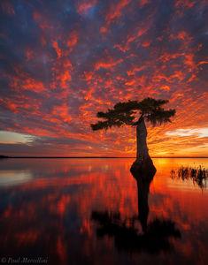 cypress, Blue Cypress Lake, Indian River County, FL, sunrise, florida, south florida, nature, photography