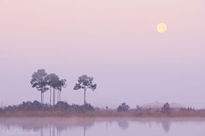 moon, sunrise, pine glades lake, everglades, Florida, nature, photography, florida national parks