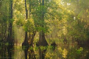 fisheating creek, swamp, cypress, florida, south florida, nature, photography