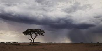 amboseli, kenya, africa, storm, acacia