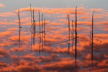 Everglades National Park, Florida, eleocharis, sunrise, reflection, nature, photography, florida national parks