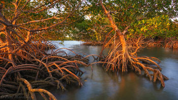 Ten Thousand Islands, Everglades National Park, Florida, mangroves, nature, photography, florida national parks