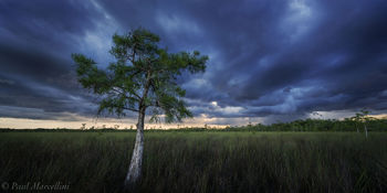 Big Cypress National Preserve, Florida, summer, storm, cypress, freshwater prairie, nature, photography