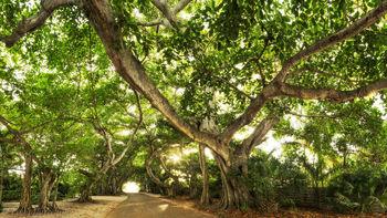 banyan, street, gasparilla island, boca grande, florida, , nature, photography