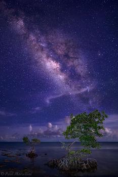 milky way, red mangrove, summer, florida keys, florida, nature, photography