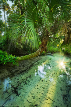 juniper springs, ocala, florida, clear water, juniper creek, nature, photography