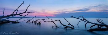 oaks, sea, Big Talbot State Park, Florida, big talbot, nature, photography