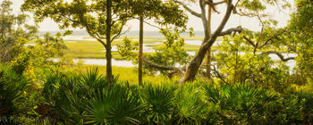 marsh, big talbot state park, florida, nature, photography