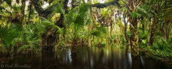 Myakka River State Park, Florida, flooded, nature, photography