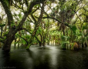 Myakka River State Park, Florida, hydric hammock, nature, photography