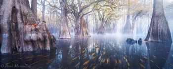 cypress, fog, fall, swamp, florida, nature, photography