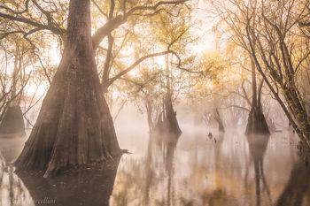 fog, suwannee valley, fall, florida, nature, photography